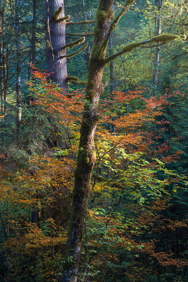 Forest Colors print